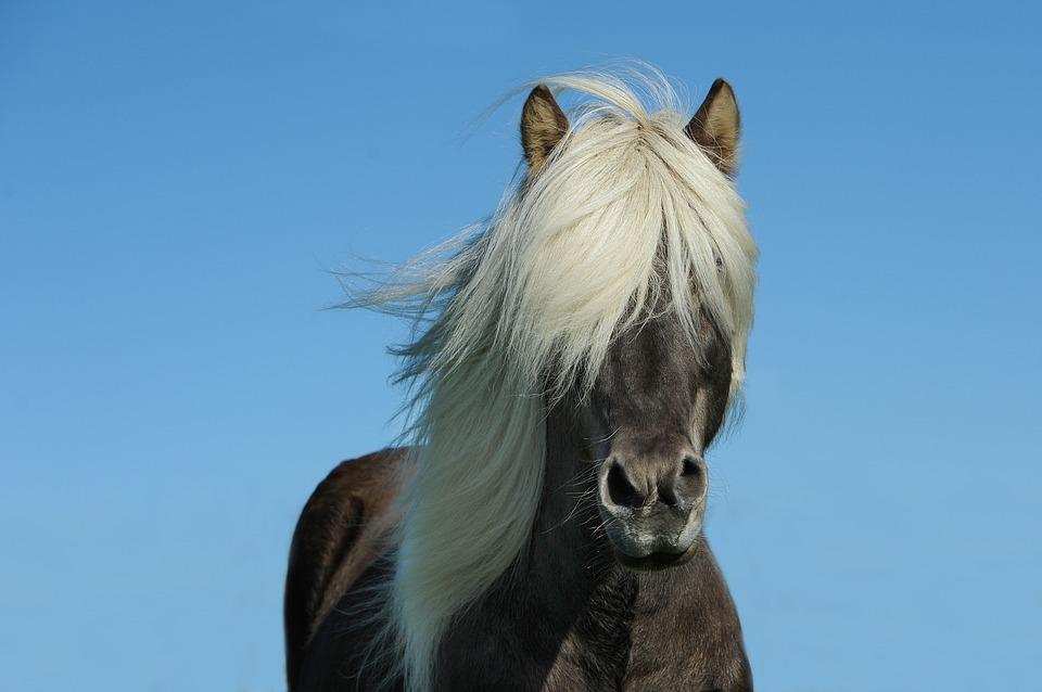 4 Tipos de cólicos equinos frecuentes