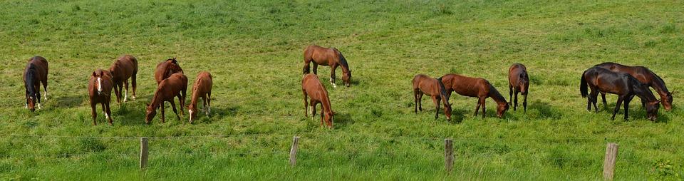 8 curiosidades sobre los caballos
