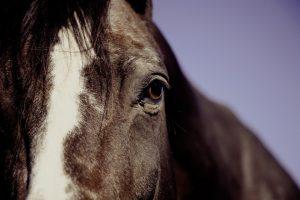 Cuidados primordiales para tu caballo