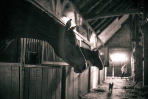Establo del caballo