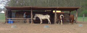 Construcción de refugio del caballo