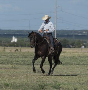 ¿Para qué sirve la castración en los caballos?